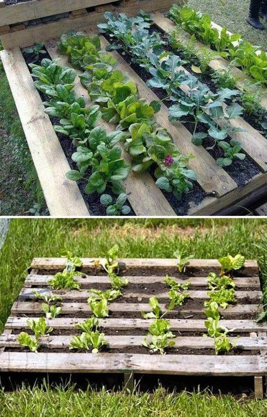Como fazer Horta com Pallets