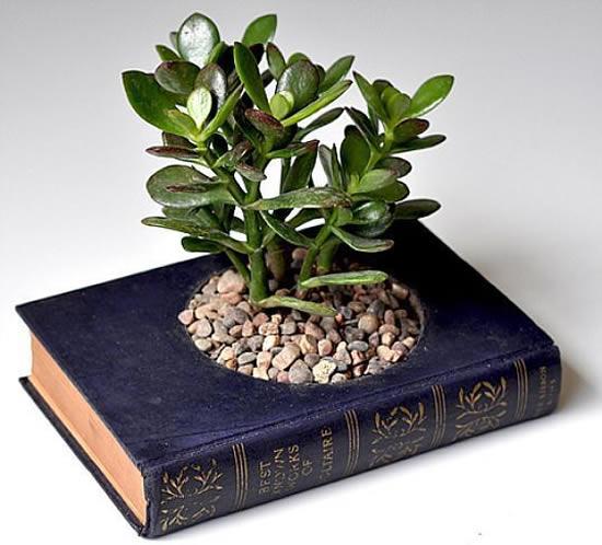 Como plantar suculentas em livros