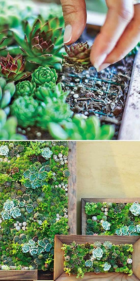 Maneiras Criativas de Como Plantar em Casa