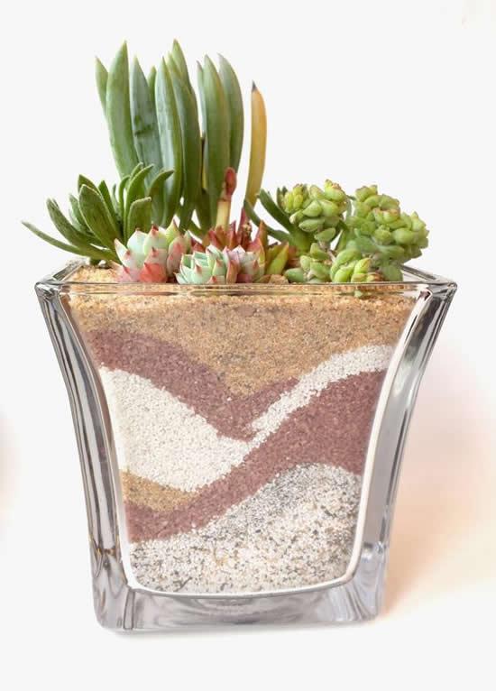 Ideias Criativas para Plantar Mini Suculentas