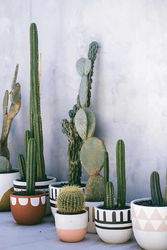 Cactos Lindos em Vasos