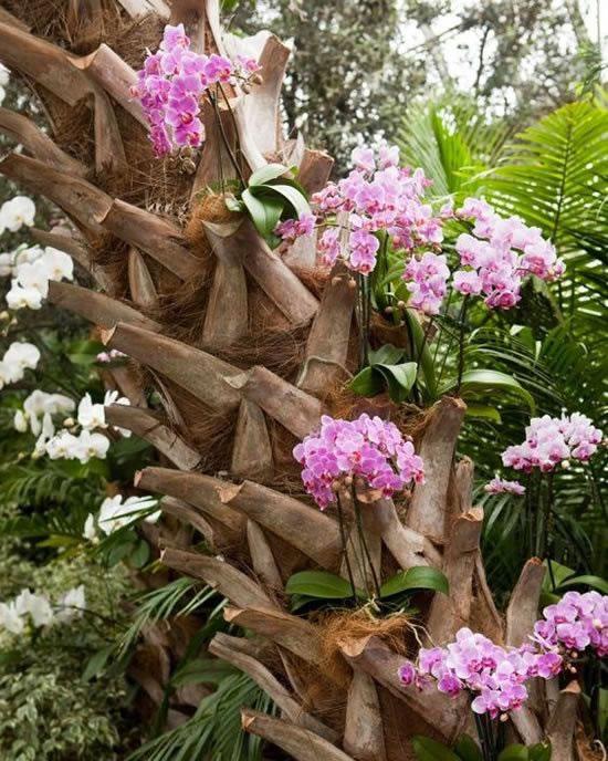 Jardins com Lindas Orquídeas