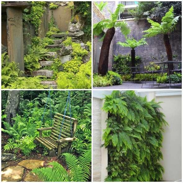 Samambaias Lindas em Jardins