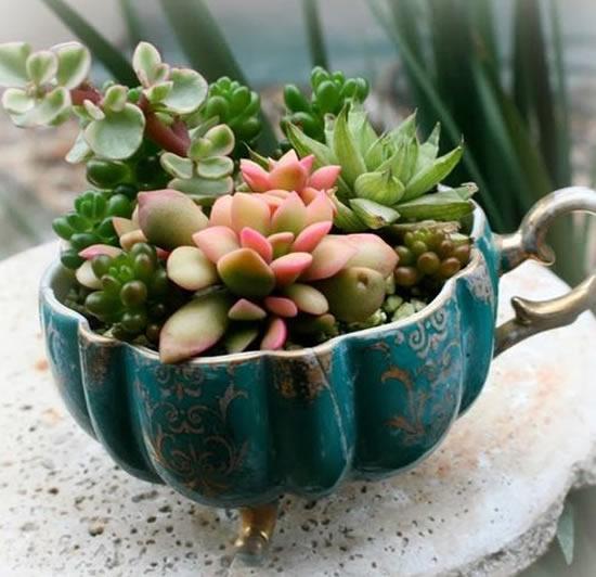 Como plantar suculentas em xícaras