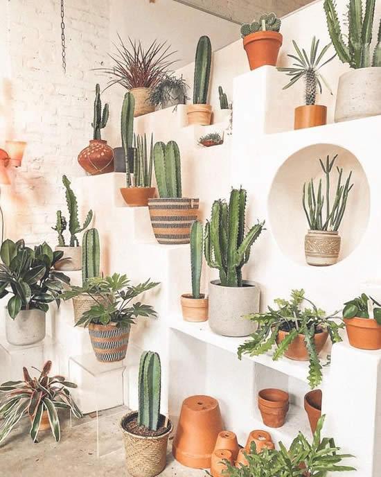 Decoração com Cactos em Vasos de Barro
