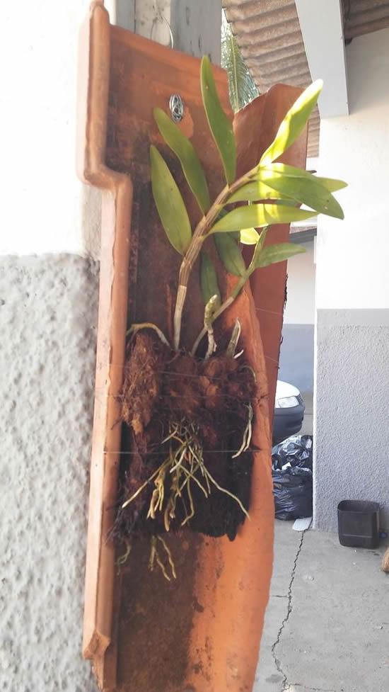 Como plantar orquídea na telha
