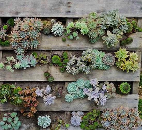 Como plantar Suculentas em Paletes
