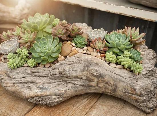 Como plantar Suculentas em Troncos