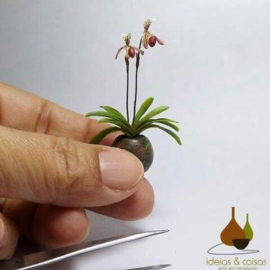 Lindas Micro Orquídeas