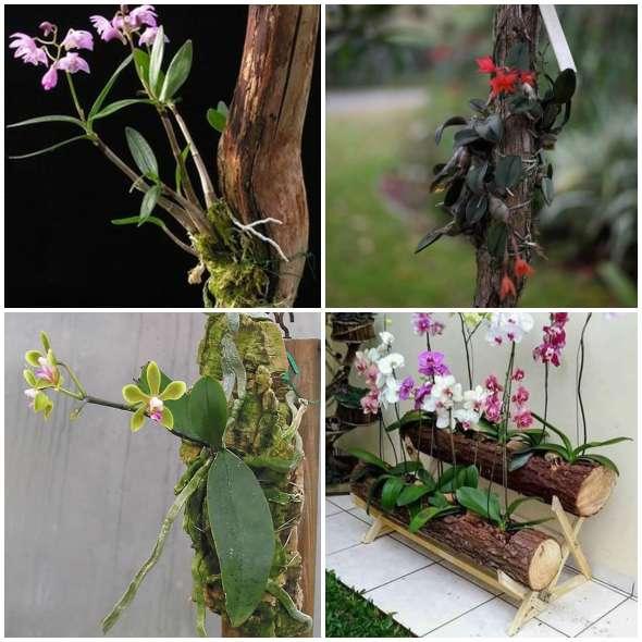Lindas Orquídeas em Troncos