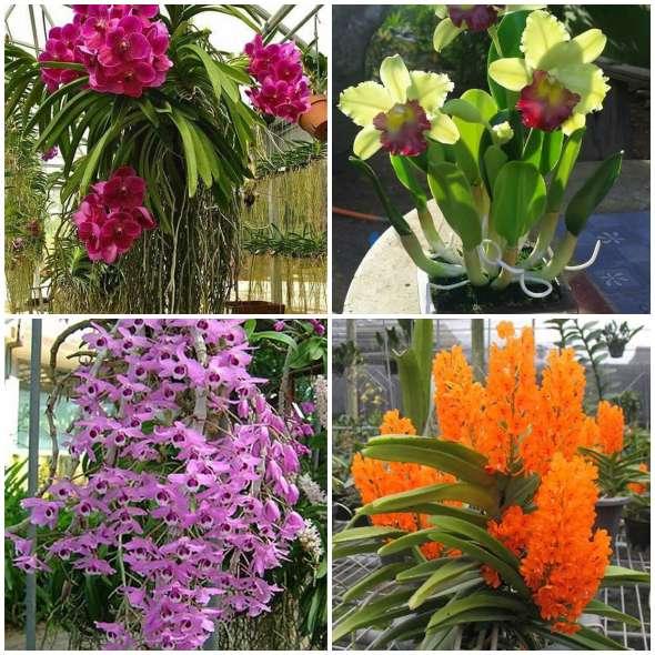 5 Orquídeas Lindas e Maravilhosas