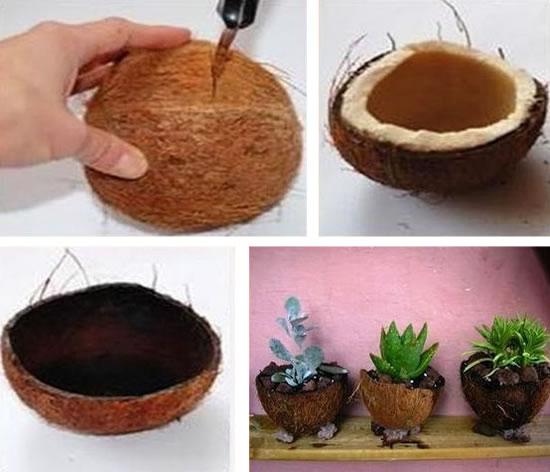 Como plantar Suculentas em Cocos