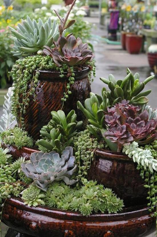 Vasos com Suculentas no Jardim