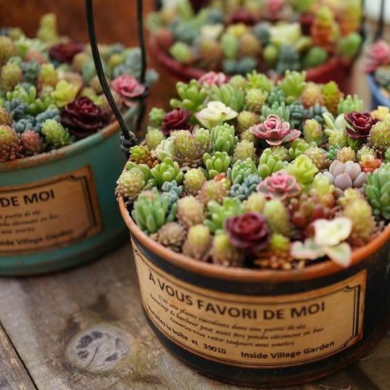 Como plantar Mini Suculentas em Latinhas