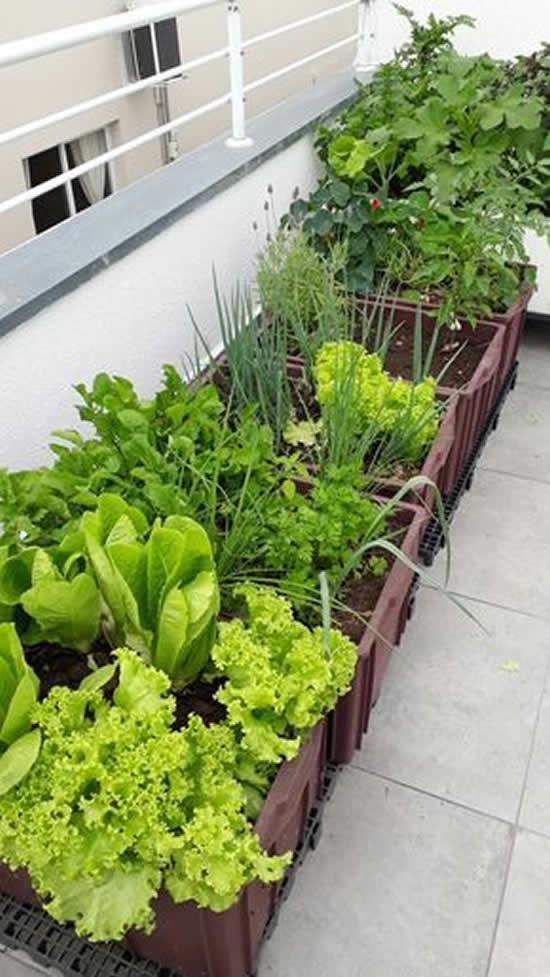 Aprenda a fazer uma horta caseira