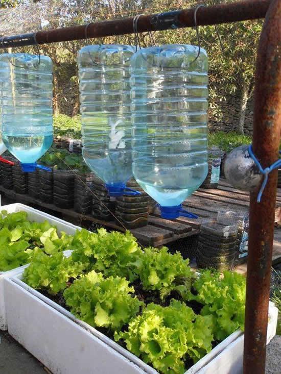 Horta Caseira com Garrafas Plásticas