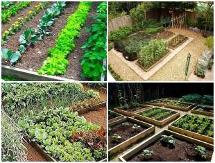 Ideias para Horta Caseira