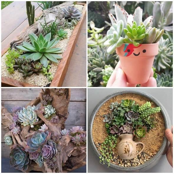 Mini Suculentas para Decoração de Jardim