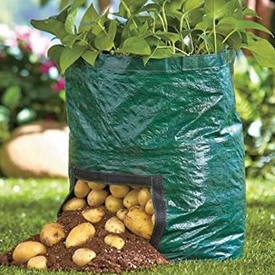 Batatas plantadas em saco