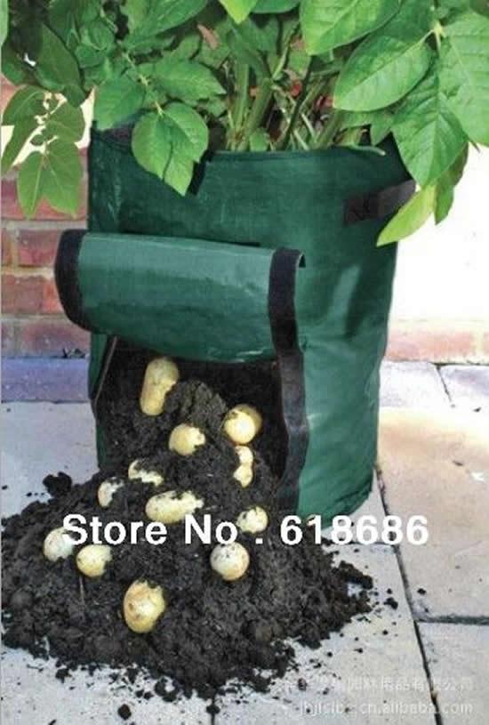 Aprenda como plantar batatas