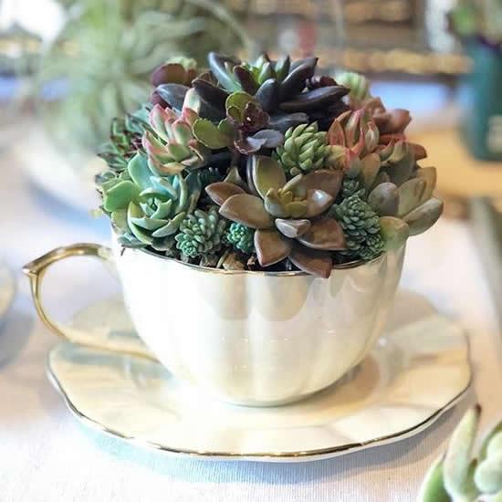 Ideias para Plantar Mini Suculentas em Xícaras