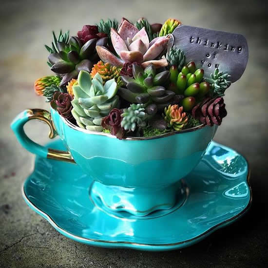 Lindas Ideias para Plantar Mini Suculentas