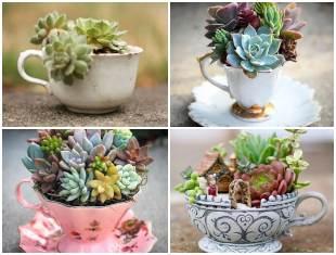 Como plantar Mini Suculentas em Xícaras
