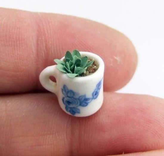 Linda Mini Suculenta em Copo em Miniatura