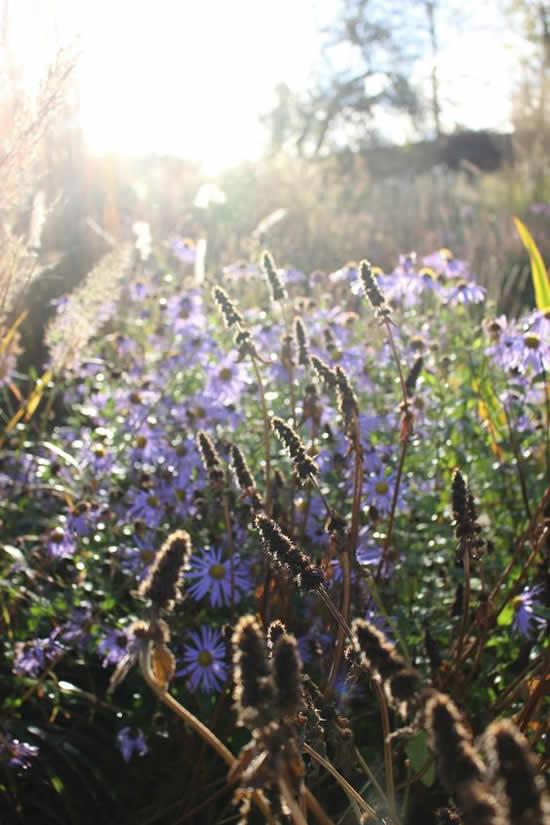Jardins lindos e floridos