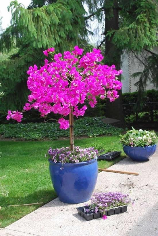 Como decorar o jardim com flores