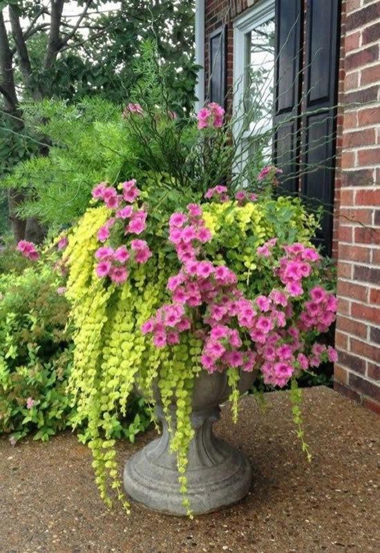 Flores decorando o jardim