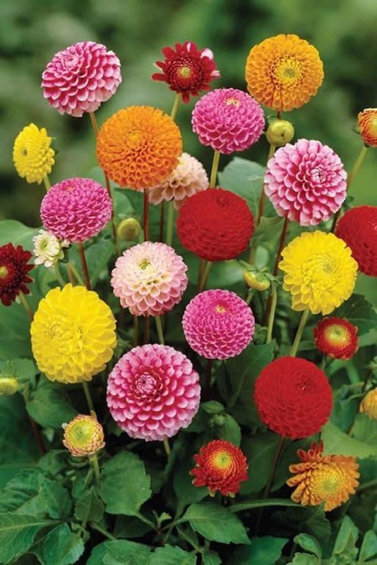 Decoração com flores para jardim