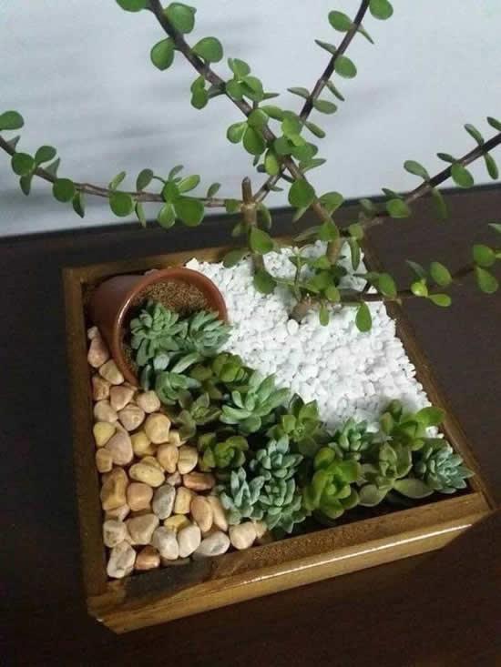 30 ideias para plantar mini cactos e suculentas