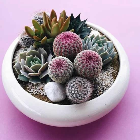Mini jardim de suculentas e cactos: 30 inspirações