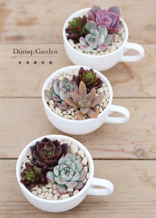 Mini suculentas plantadas em xícaras