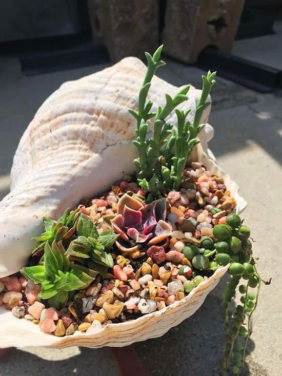 Ideias para Plantar Suculentas em Conchas