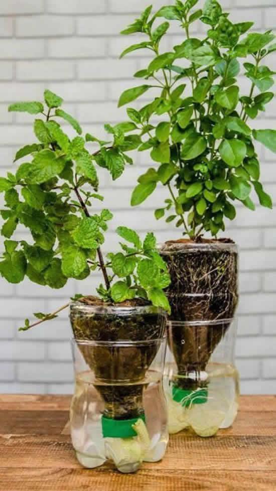 Vasos de Jardim com Garrafas Plásticas