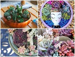 Arranjos e ideias lindas com mini suculentas