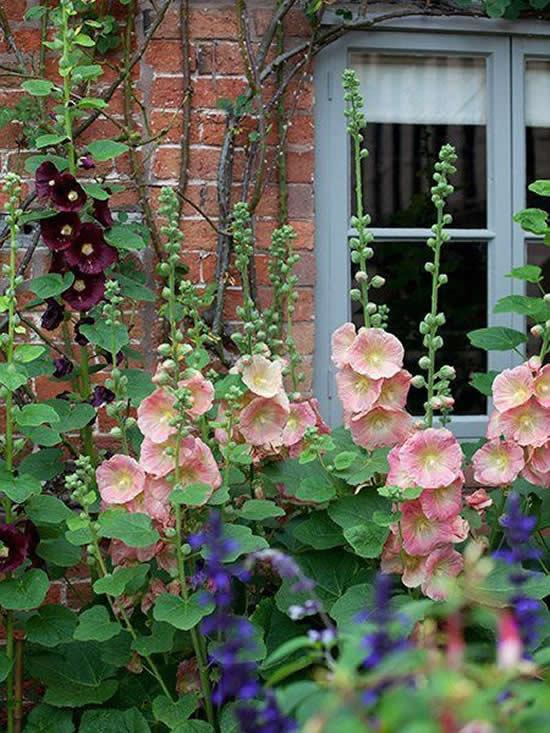 Lindas Flores para Jardim