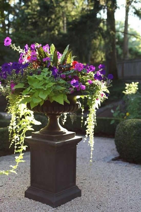 Flores Lindíssimas para Decoração de Jardim