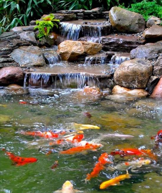 Lago de jardim com peixes