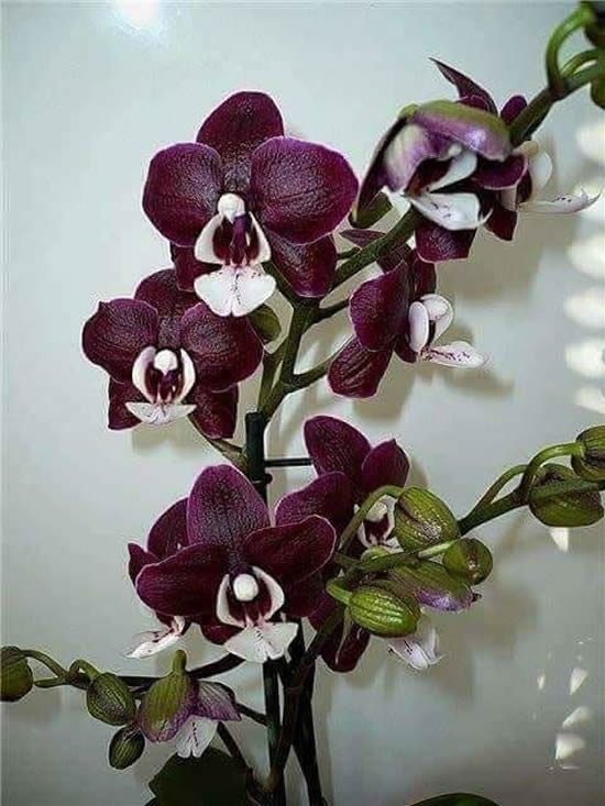 Belíssimas orquídeas