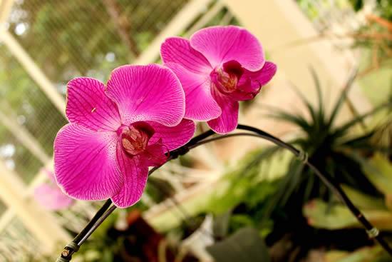 Lindas flores orquídeas