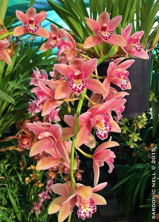 Lindas orquídeas