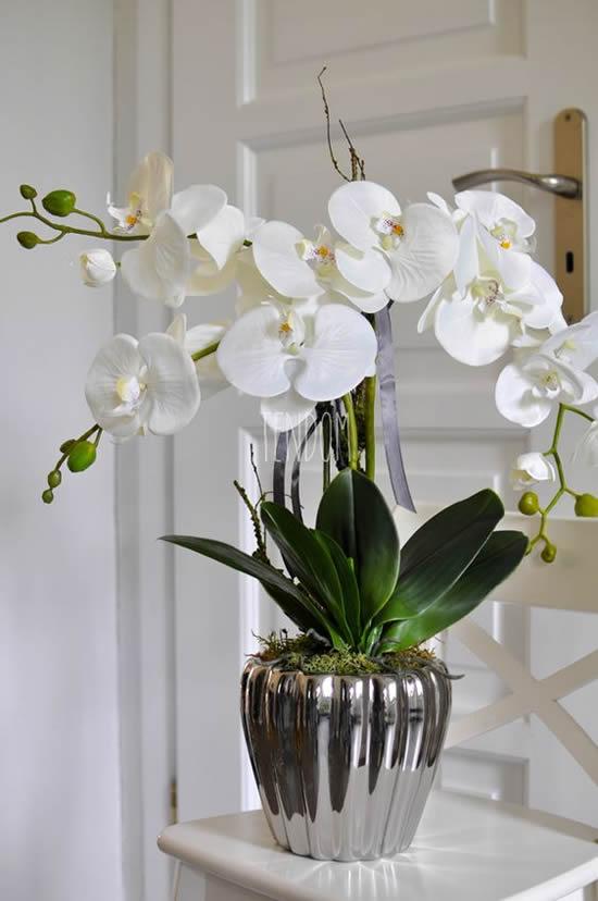 Orquídea Phau