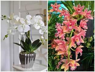 Lindas orquídeas para inspiração