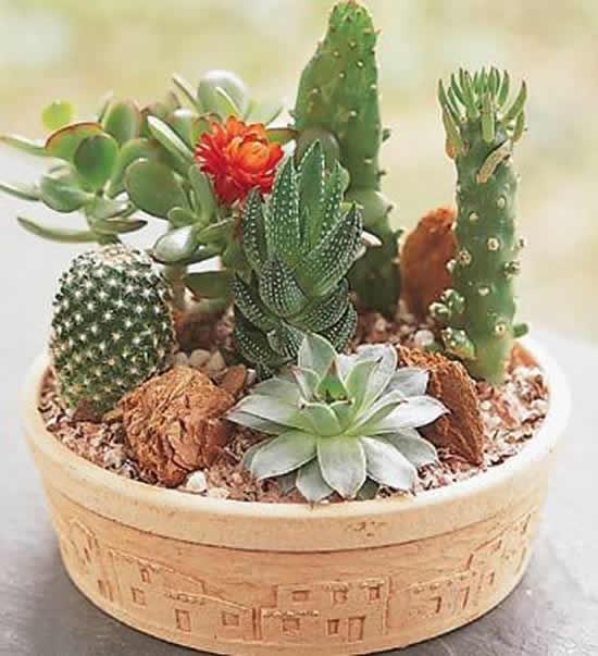 Faça um lindo mini jardim com suculentas e cactos