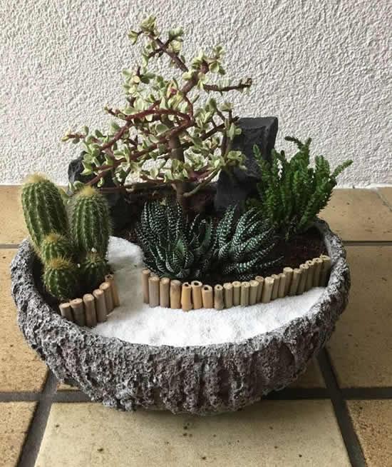 Mini jardim com cactos