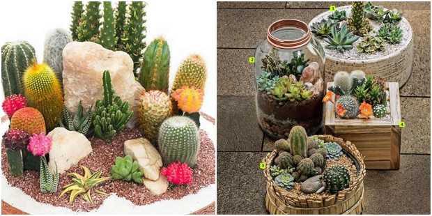 12 ideias lindas de mini jardim com cactos