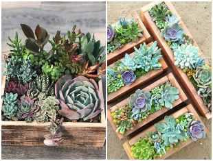 Mini jardim com suculentas em caixote de madeira